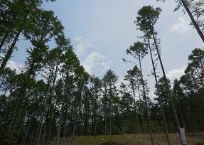 名古屋城学びの場「名古屋城と木のはなし 〜城下町の礎となった森と山守〜」の画像