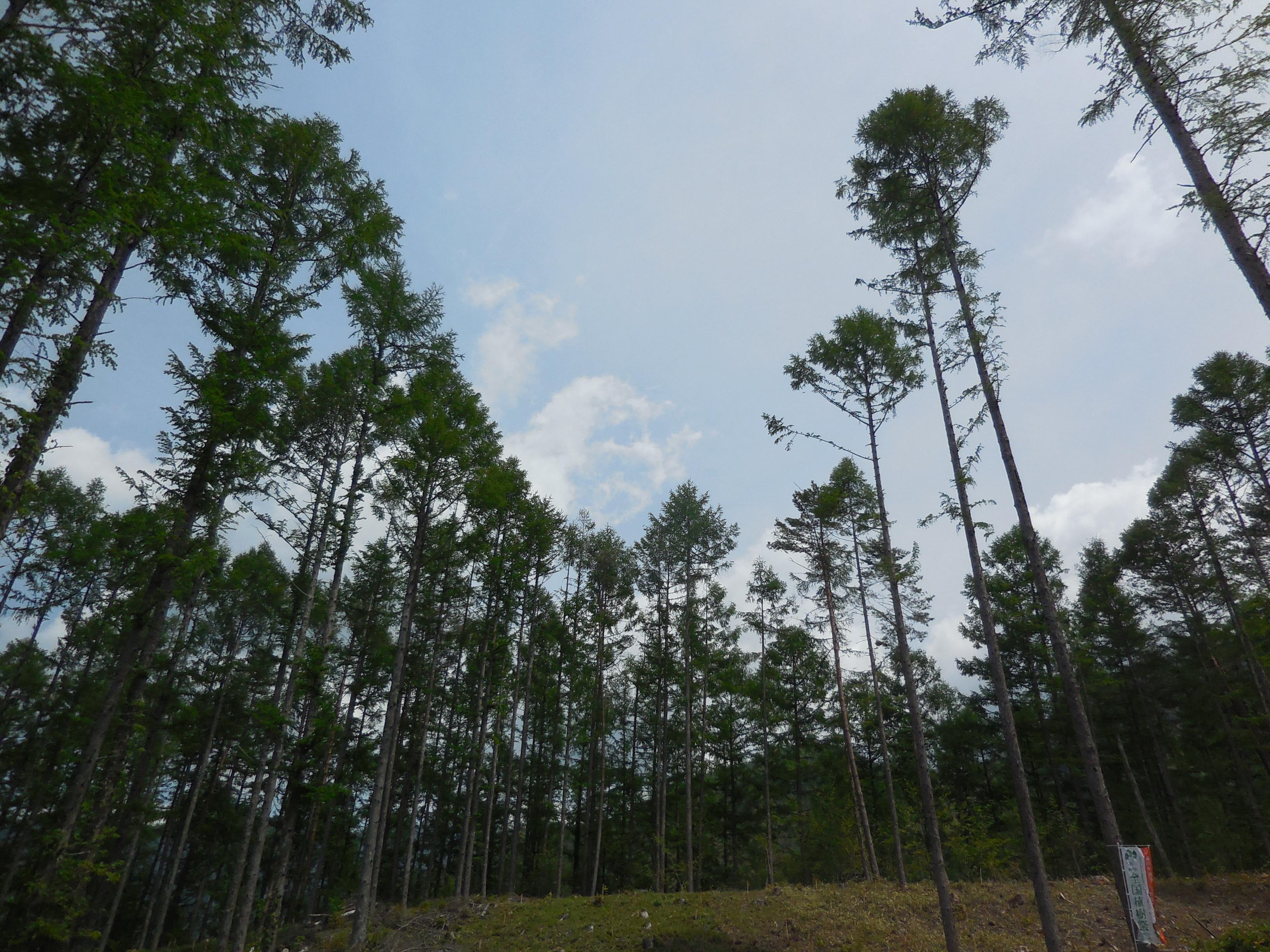 森の講座.JPG