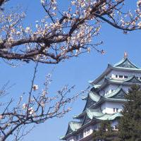 平成31年 桜の開花状況の画像