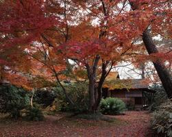 「島田真千子ヴァイオリンコンサート in名古屋城」を開催しますの画像